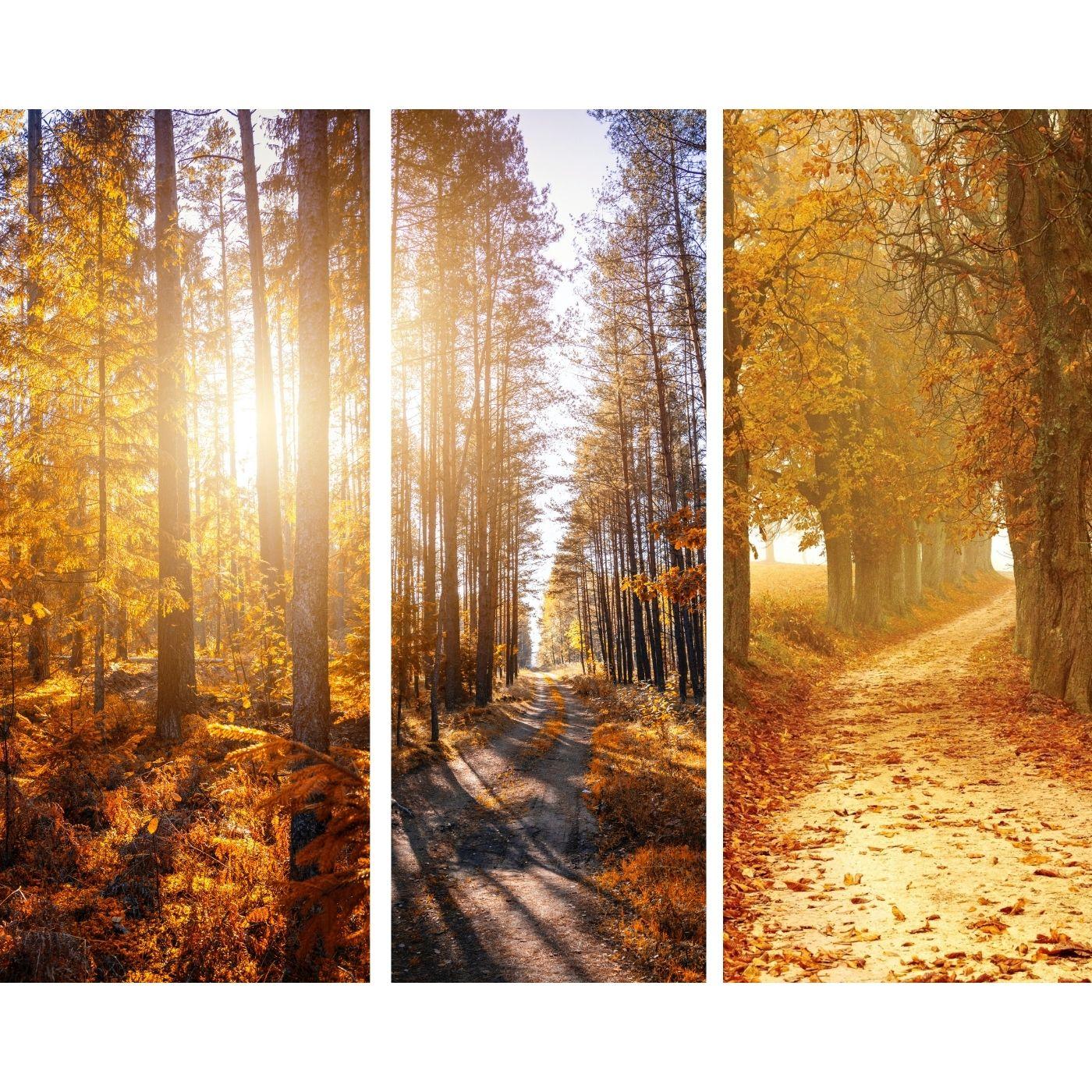 Peaceful Autumn Breeze